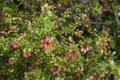 Картинка макро, цветы, пчела, фотограф, photography, photographer, Brian Storey