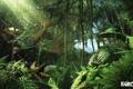 Картинка джунгли, крушение, far cry 3, самолет, заросли, игра, game