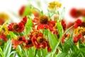 Картинка цветы, природа, стебли, растения, ярко