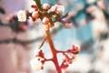 Картинка весна, ветки, Макро, листья, бутоны, растения, природа