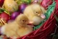 Картинка утки, яйца, пасха, утята, крашенки
