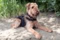 Картинка друг, собака, Terrier