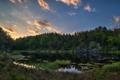 Картинка лес, трава, деревья, природа, озеро, Норвегия, Norway