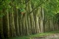Картинка зелень, деревья, природа, фото, дерево, красота, леса