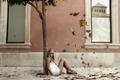 Картинка листья, девушка, настроение, улица