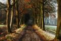Картинка дорога, деревья, природа