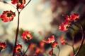 Картинка красные, лепестки, цветы