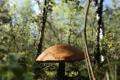 Картинка лес, трава, гриб, Природа