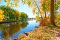 Картинка зелень, солнце, деревья, река, дома