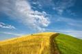 Картинка зелень, небо, трава, рожь, холм, лето против осени