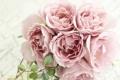 Картинка розы, букет, лепестки, розовые