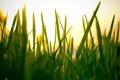 Картинка небо, трава, макро, свет, природа, фото, обои для рабочего стола