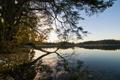Картинка лес, небо, вода, деревья, пейзаж, природа, озеро