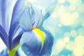 Картинка цветок, лепестки, стебель, ирис