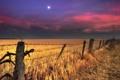 Картинка поле, ночь, забор