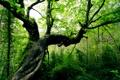 Картинка свет, природа, дерево, дес