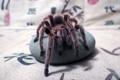 Картинка макро, паук, spider, насекомое