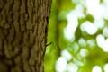 Картинка листья, природа, росток, Ствол, кора, листики, боке