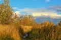 Картинка осень, трава, тучи, природа, фото, тропа