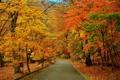 Картинка дорога, осень, деревья, парк