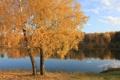Картинка осень, лес, листья, вода, озеро, гладь, дерево