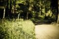 Картинка дорога, лето, природа, травы