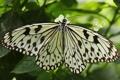 Картинка листья, бабочка, насекомое