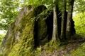 Картинка лес, деревья, камень, мох