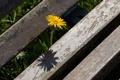 Картинка цветок, лето, макро, природа