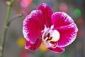 Картинка экзотика, орхидея, макро