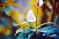 Картинка листья, бабочка, боке