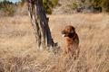 Картинка поле, природа, собака