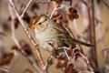 Картинка ветки, дерево, ветви, птица, воробей