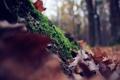 Картинка лес, мох, осень, листья, листва