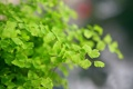 Картинка растение, зеленое, лепестки, макро, macro
