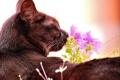 Картинка кот, кошак, котяра, цветочек, принюхивается
