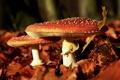 Картинка листья, осень, ночь, грибы, мухоморы