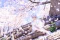 Картинка весна, кукла, лепестки, сакура