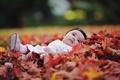 Картинка осень, листья, настроение, девочка