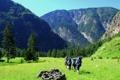 Картинка Природа, Горы, Алтай, Поход