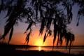 Картинка небо, вода, солнце, свет, ветки, Дерево