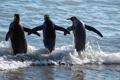 Картинка море, природа, пингвины