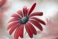Картинка природа, цветок, краски, лепестки