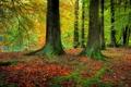 Картинка зелень, осень, лес, листья, деревья, ветки, стволы