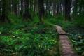Картинка лес, трава, деревья, дорожка, США, штат Вашингтон, Olympic National Park