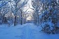 Картинка лес, снег, природа