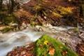 Картинка осень, листья, природа, река
