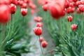 Картинка поле, листья, цветы, красный, фон, widescreen, обои