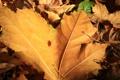 Картинка осень, листья, жёлтые
