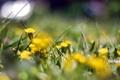Картинка цветы, природа, фон, обои, поляна, растения, размытость
